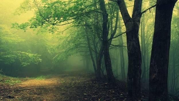 Pădurea Hoia-Baciu: Triunghiul Bermudelor din România